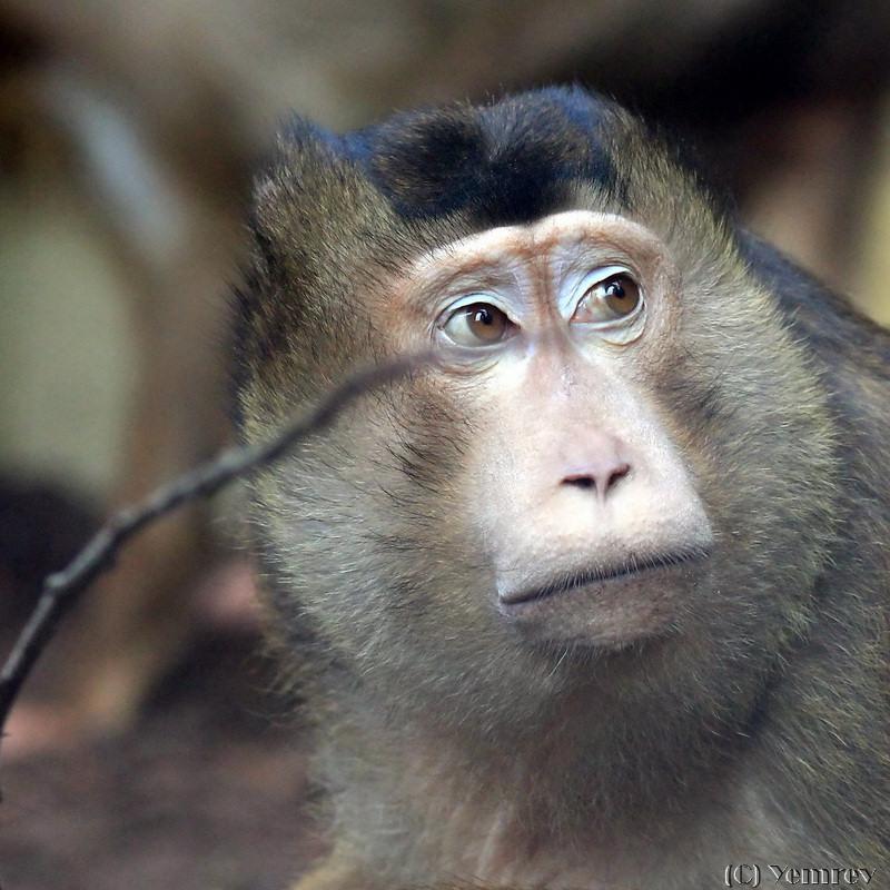 Een dagje naar de dierentuin yemrev kiekt - Geloof glas ingerichte ...