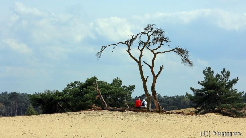 Zandverstuiving bij Otterlo