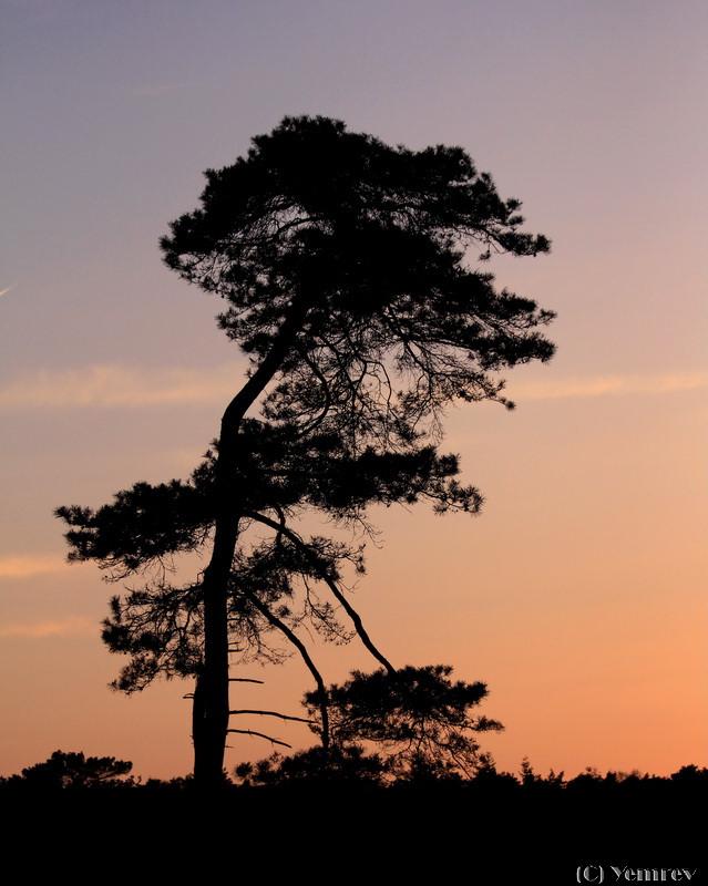 Zonsondergang in Otterlo