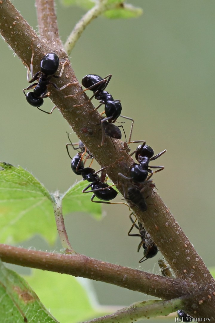 Bezige mieren