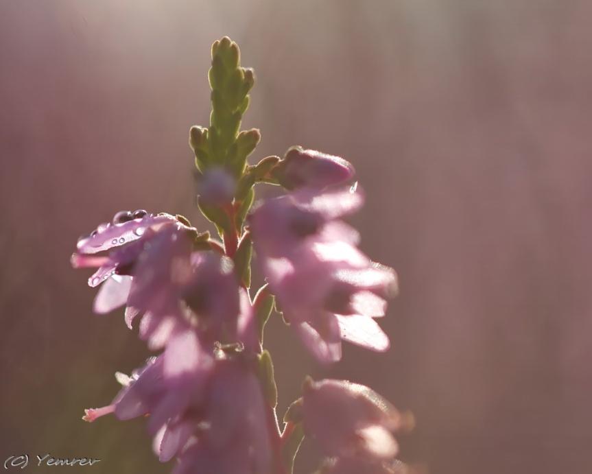 2014-08-21 09-22-01 - IMG_1562dev_1024px