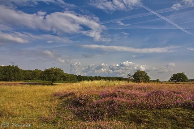 De Zilker Heide