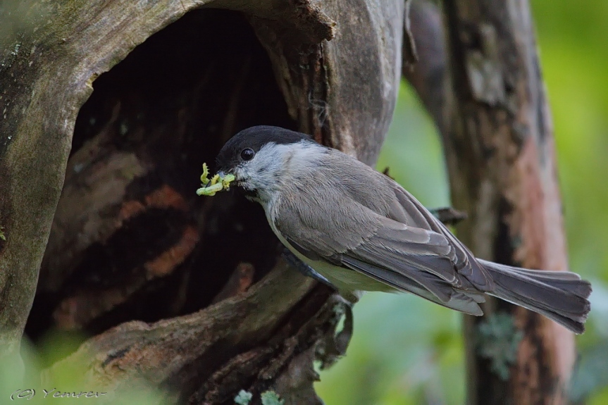 Nest in boom