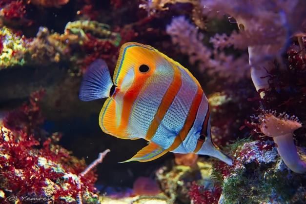 Aquarium Artis 1