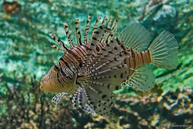 Aquarium Artis 2