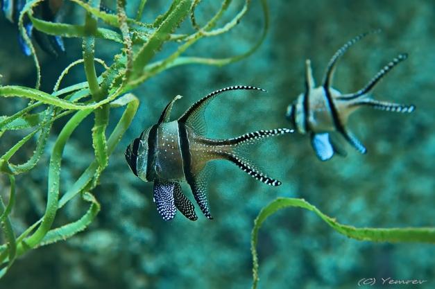 Aquarium Artis 3