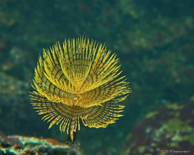 Aquarium Artis 4