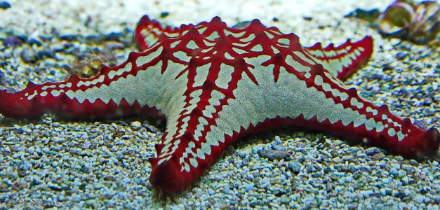 Aquarium Artis 5