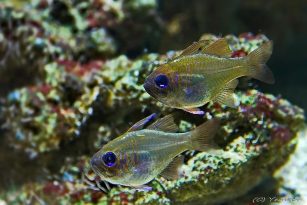 Aquarium Artis 8