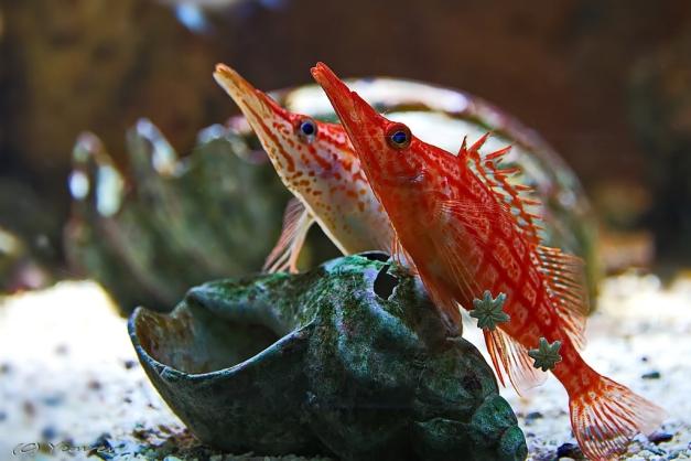 Aquarium Artis 11