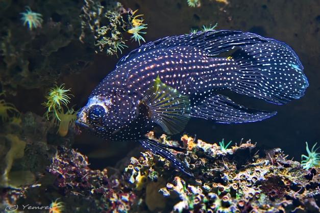 Aquarium Artis 10