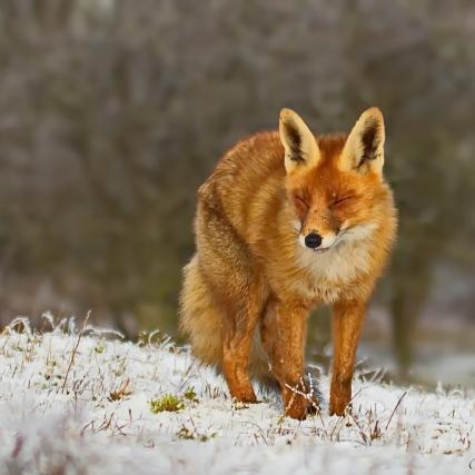 AWD-vos in de sneeuw