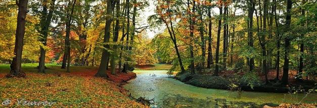 Herfst in Groenendaal