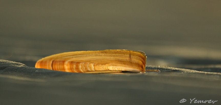 Scheermes op zand