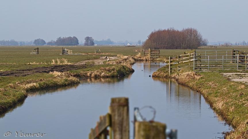 Landschap Groene Hart