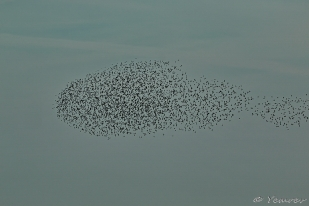 Vliegende Vis 1