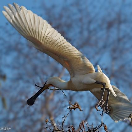 Terug naar het nest