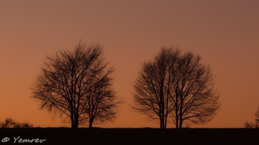 Landschap met bomen (warm)