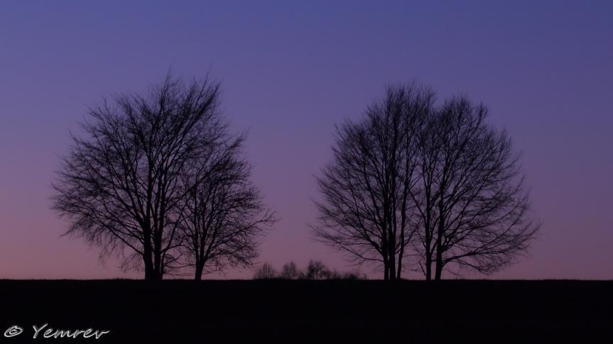 Landschap met bomen (lauw...)