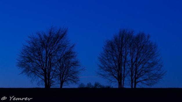 Landschap met bomen (koel)