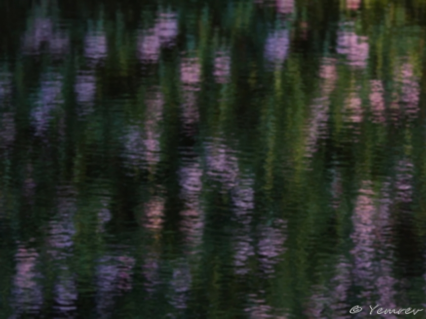 Rhododendron in Spiegelbeeld