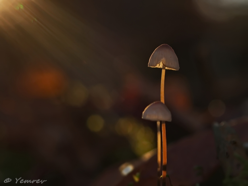 Lichtpuntje