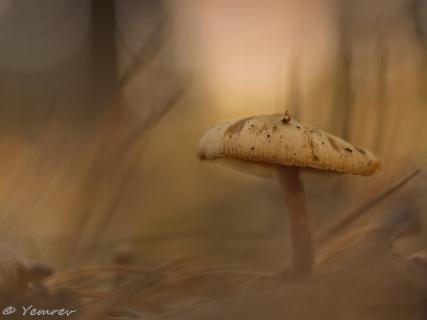 In het dennenbos