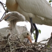 17 Ander nest
