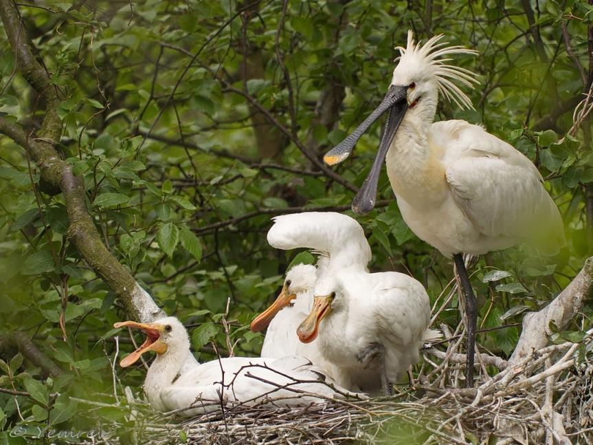 Moeder in aantocht