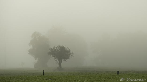 Landschapje met torenvalk