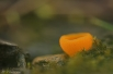 Oranje Bekerzwammetje
