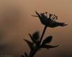 Vogelmuur silhouet