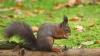 Typisch een Eekhoorn