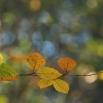 21 Herfstkleuren