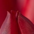 03 Rood op rood