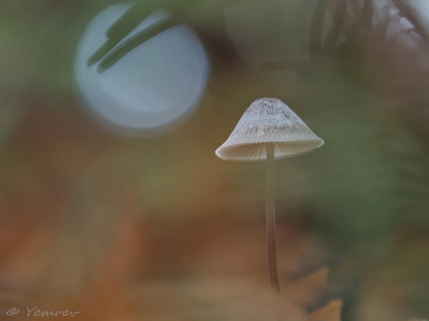 Lampekapje