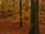 Leuvenumse Bos