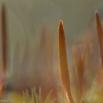 Ruig Haarmos