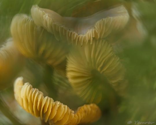 Lamellenkluwen