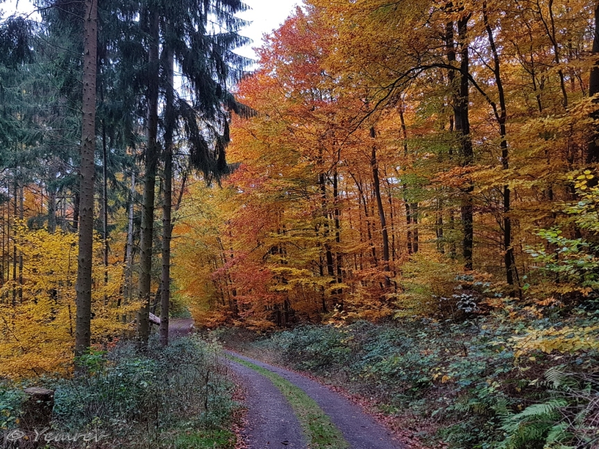 Osterspaier wald