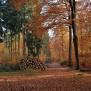 Kamper Wald