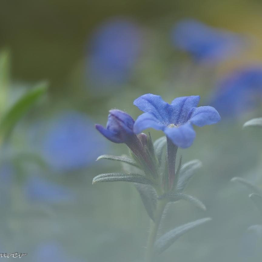 05. Blauwe kruipers