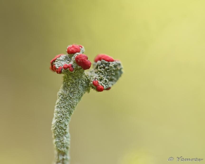 Harz -1: Flora